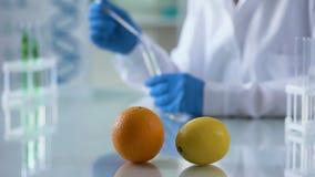 Tabla del laboratorio de la naranja y del limón, químico que trabaja en el extracto de la perfumería, aromatherapy almacen de metraje de vídeo