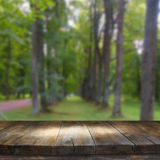 Tabla del tablero de madera del vintage delante del paisaje soñador y abstracto del bosque Imagen de archivo libre de regalías