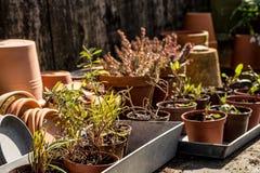 Tabla idílica romántica de la planta en el jardín con los potes, los utensilios de jardinería y las plantas retros viejos de la m Imagen de archivo
