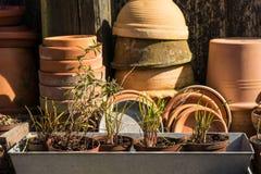 Tabla idílica romántica de la planta en el jardín con los potes, los utensilios de jardinería y las plantas retros viejos de la m Fotografía de archivo libre de regalías