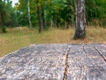 Tabla rústica vacía delante del fondo del campo Espacio vacío de la sobremesa verde de madera del bosque delante de árboles en pa fotos de archivo libres de regalías