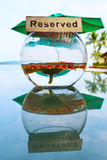 Tabla reservada, girasol anaranjado en una taza de cristal, reflexión, fondo de los árboles de la playa Imagen de archivo