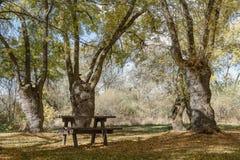 Tabla y sillas en el campo Fotografía de archivo