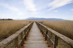 Tablas DE Daimiel. Natuurreservaat in Spanje Stock Afbeeldingen