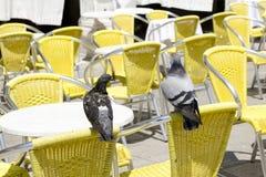 Tablas vacías de café de la acera con dos palomas Imagen de archivo