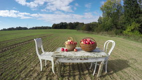 Table with apples, two chairs and cat in the field, 4K time lapse stock video footage