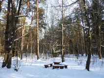 Beautiful winter trees and resting place in forest , Lithuania Stock Photos