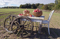 Table with chair, apples and wooden wheels in field Royalty Free Stock Photo