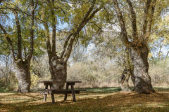 Table and chairs in the field Stock Photography