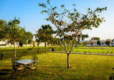 Table with chairs outdoors under tree Stock Photography