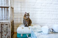 Table, chairs, shelves on the background of a white brick wall in vintage loft interior with cat.  royalty free stock image