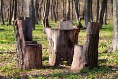 Table and chairs of wood trunk stumps. Rest place Royalty Free Stock Photography