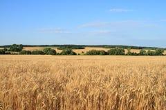 Table de blé. Image libre de droits