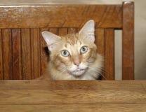 Table de chat Photos libres de droits