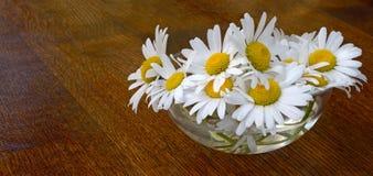 Table de cuvette de marguerite Image stock