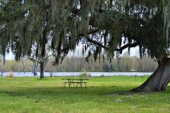 Table de pique-nique sous un grand arbre Photo libre de droits