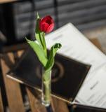 Table de restaurant de café avec la tulipe rouge Images libres de droits