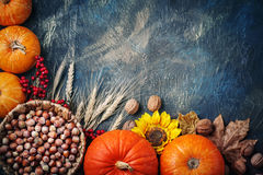 Table decorated with pumpkins and . Harvest Festival,Happy Thanksgiving. Royalty Free Stock Photo