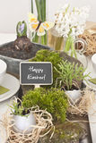 Table decoration Royalty Free Stock Photo