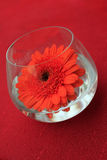 Table decoration, red flower. In cup stock photography