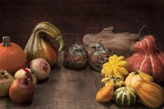 Thanksgiving display with pumpkins, gourds, feather Birdsand pom Royalty Free Stock Image