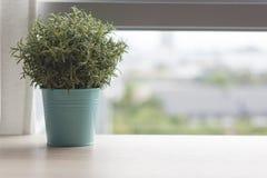 Table en bois avec la petite plante verte dans des pots sur la fenêtre Photographie stock libre de droits