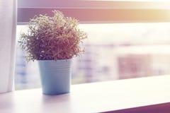 Table en bois avec la petite plante verte dans des pots sur la fenêtre Images stock