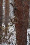 Table en bois d'oiseau avec du pain sur un arbre photographie stock libre de droits