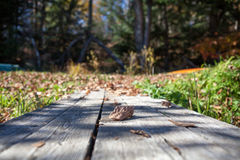 The table in the fall forest, Canada. The fall forest Stock Photos