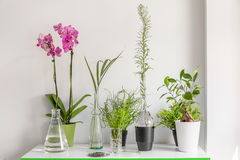Table with flower and plants Royalty Free Stock Photos