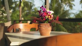 Table with flower pot on a balcony with blurred tropical trees background, Bali on sunny summer day stock video