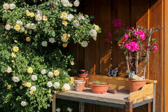 Table with flower pots for planting Royalty Free Stock Image