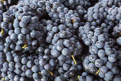 TABLE GRAPE Stock Photo