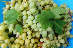 Table grapes and leaves Stock Photo
