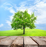 Table and green tree Royalty Free Stock Photos