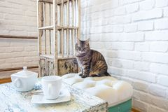 Table with kettle and cup, chairs, shelves on the background of a white brick wall in vintage loft interior with cat.  stock image