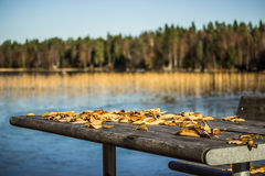Table with with Leaves in the Fall Royalty Free Stock Image