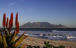 Free Table Mountain Aloe Stock Photos - 900553