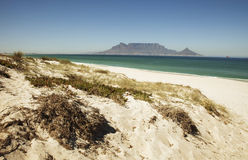 Table Mountain from Bloubergstrand. Table Mountain, viewed from Bloubergstrand over Table Bay, showing a dune with foliage and beach in the foreground Royalty Free Stock Photography