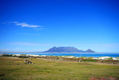 Table mountain, capetown stock image