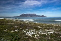 Table Mountain and Flowers. Table mountain with flowers in the foreground on a warm Summer day Stock Images