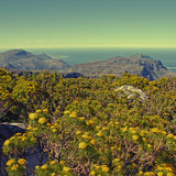 Table Mountain National Park, South Africa Royalty Free Stock Image
