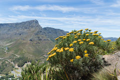 Table Mountain seen from Lions Royalty Free Stock Images