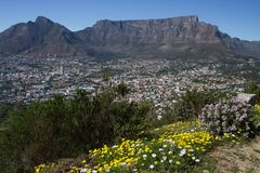 Table Mountain during spring in Cape Town Royalty Free Stock Image
