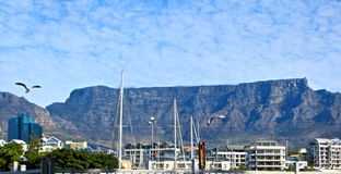 Table Mountain. View of daytime Table Mountain from the Waterfront marina with seagulls in Cape Town, South Africa royalty free stock photography