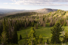 Table Mountain Wyoming Backcountry Forest Royalty Free Stock Photo
