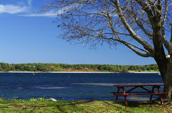Table Beside the Ocean. A picnic table under a tree beside the ocean Stock Photos