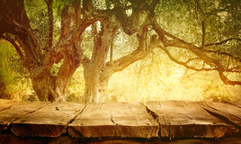 Table with olive tree Royalty Free Stock Images