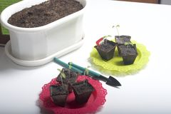 On the table is a seedling in peat containers. Also, a pot of soil to which transplants need to be transplanted, and tools for til. Lage Stock Images