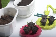 On the table is a seedling in peat containers. Also, a pot of soil to which transplants need to be transplanted, and tools for til. Lage Stock Image